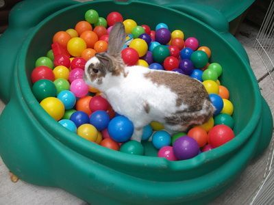 educación en conejos