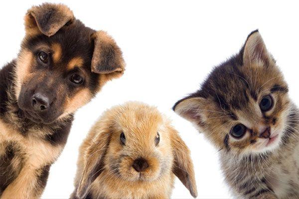 Vacunacion perros, gatos y conejos