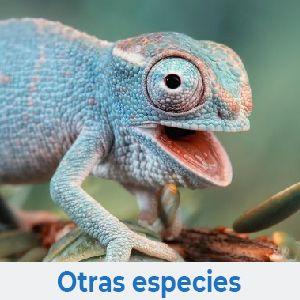 Otras especies de animales