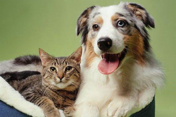 ¿Mi perra tiene el celo? ¿Mi gata tiene el celo?