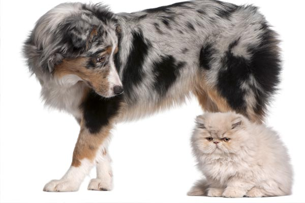 ¿Debo castrar a mi perro? ¿Debo castrar a mi gato?