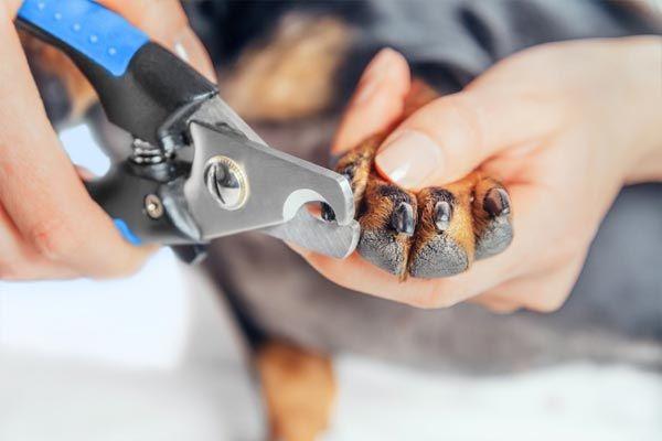 como cortar las uñas a mi perro en casa