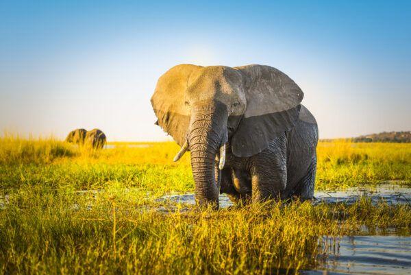 Datos curiosos sobre elefantes