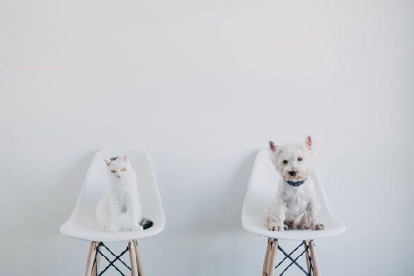 Dieta veterinaria perros y gatos