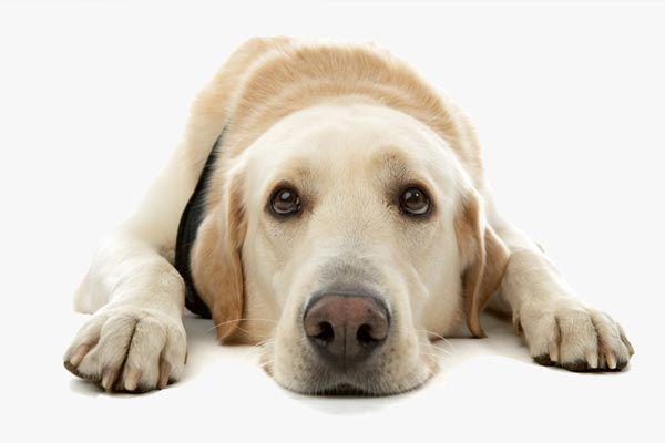 ¿Por que vomita espuma blanca mi perro?