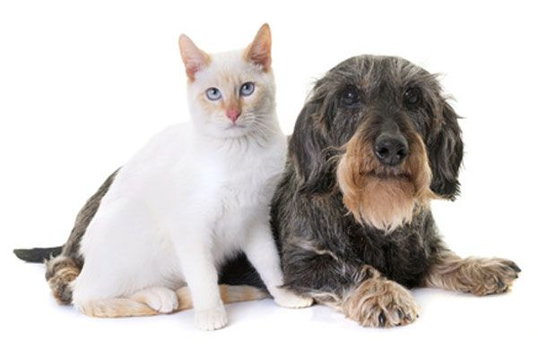 Edad geriátrica perros y gatos