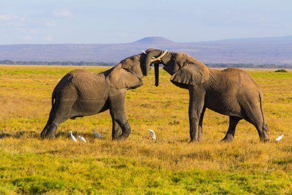 Trompas de elefantes