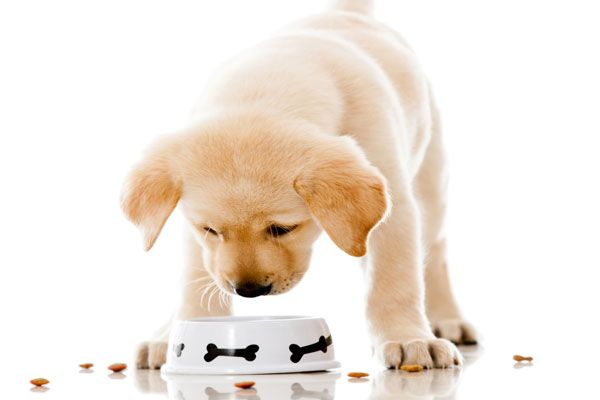 alimentación de un cachorro