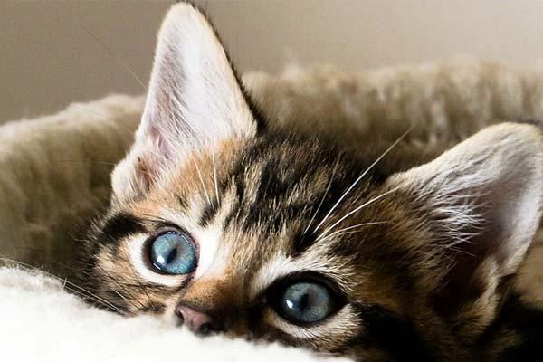 gato nuevo en casa