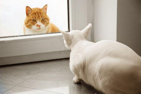 como presentar un gato a la familia