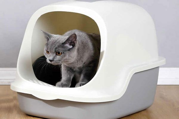 arenero para gatos