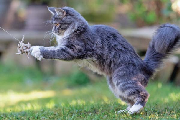 jugar con tu gato
