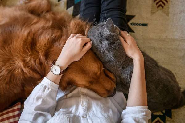 vida con animales