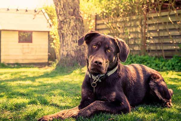 Esperanza de vida de un perro con leishmaniosis