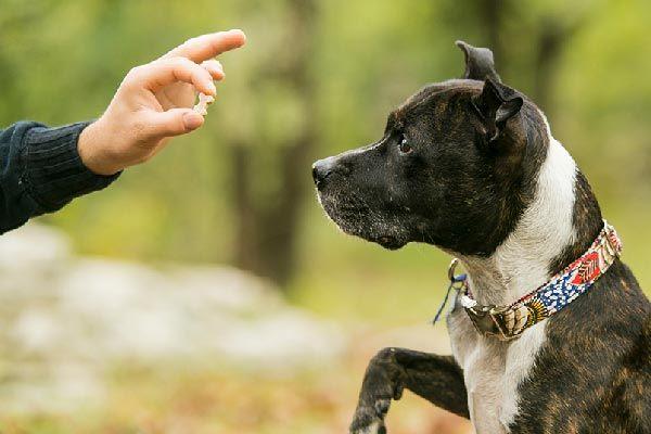 refuerzo positivo y negativo en perros