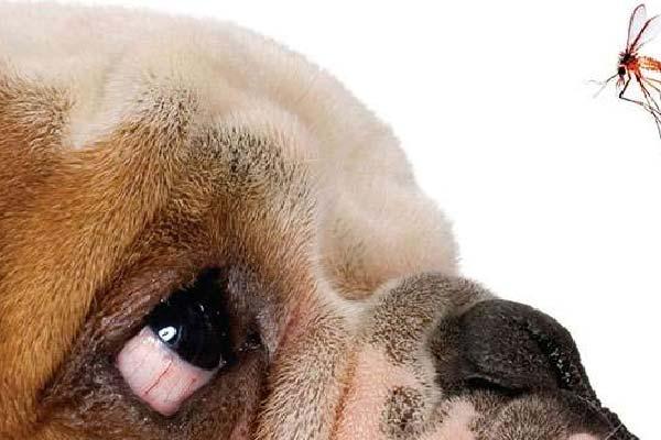 tipos de leishmaniosis canina