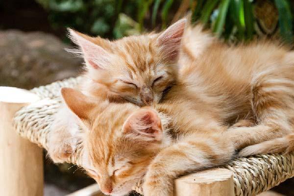 amasan los gatos