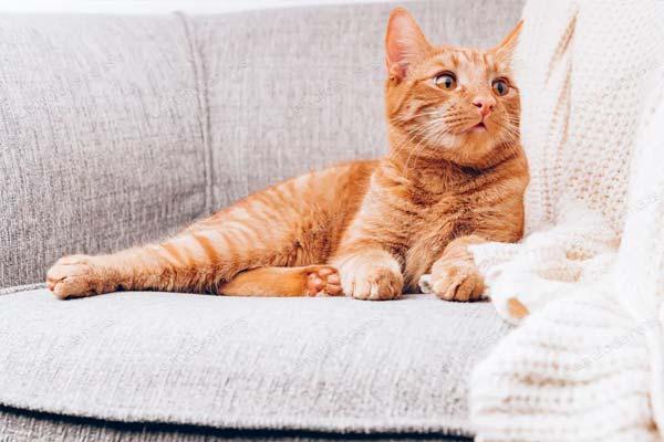 cuidados para un gato esterilizado