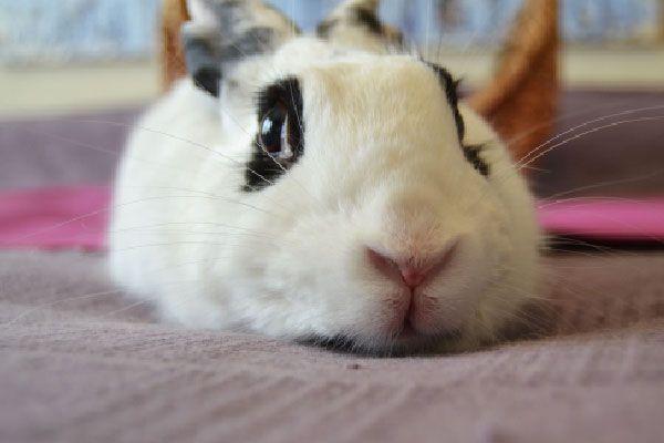 post - operatorio conejo esterilizado