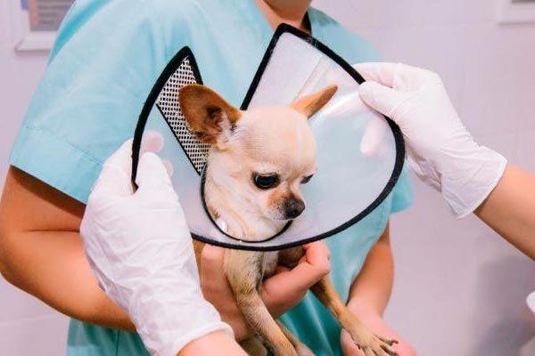 uso de la campana en perros